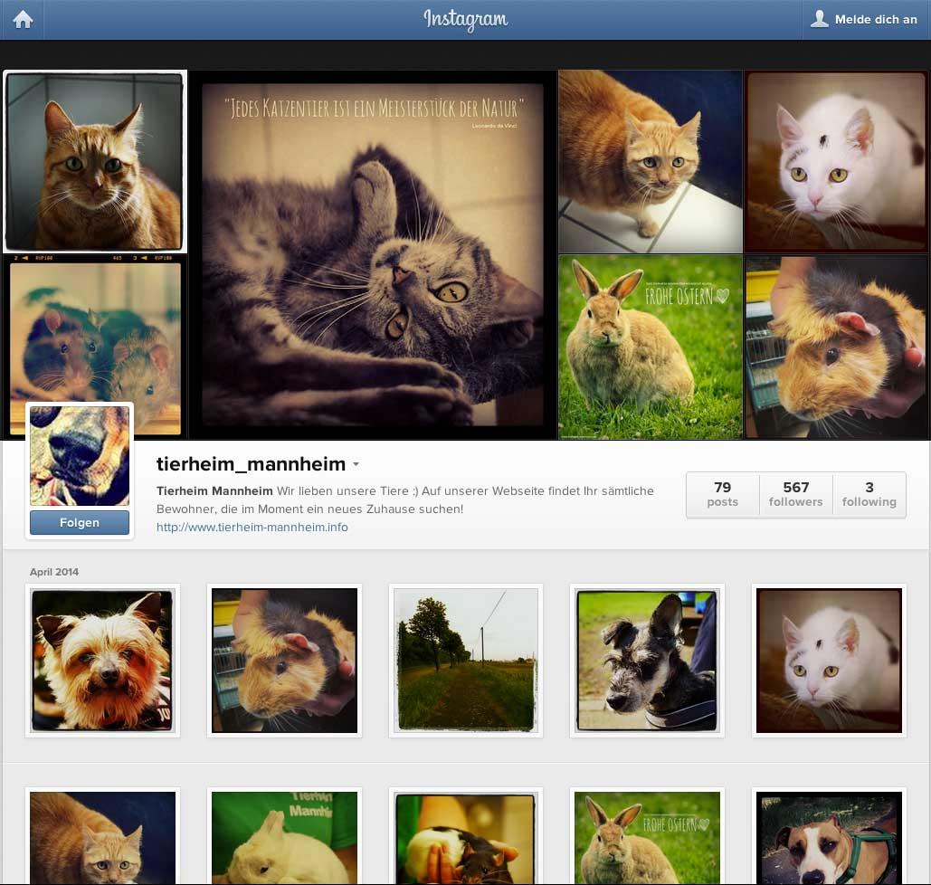 instagram-marketing-kleine-unternehmen-tierheim-mannheim